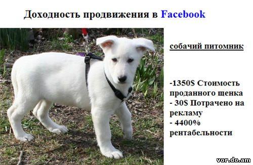 Продажа щенков через Фейсбук